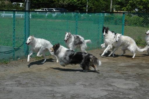 Doggurann